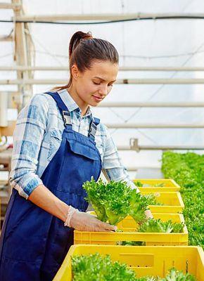 Cuidar los cultivos con carros logísticos, contenedores y otras soluciones agrícolas